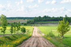 Beautiful green fields under blue sky in summer Stock Photography