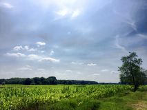 Beautiful green flat landscape with deep blue sky and clouds. In the Belgian Kempen, province Antwerpen, Turnhout royalty free stock images