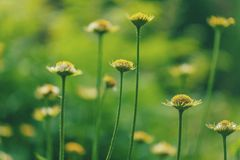 beautiful green flowers Royalty Free Stock Images