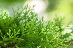 Beautiful green foliage Stock Images