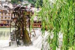 Beautiful green foliage of weeping willow, Phoenix Ancient Town. Fenghuang, China - September 22, 2017: Beautiful green foliage of weeping willow. Water wheel royalty free stock image