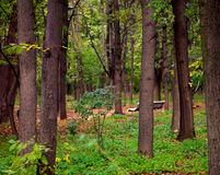 Beautiful green forest Stock Photos