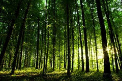 Beautiful green forest Royalty Free Stock Image