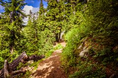 Narrow footpath in the green forest. Beautiful green forest and brown footpath Royalty Free Stock Photos