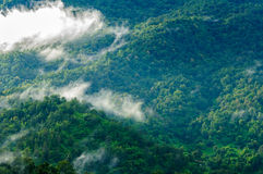 Beautiful green forest in the fog after rain royalty free stock image