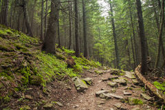 Beautiful green forest with a footpath. Beautiful green mysterious forest with a footpath Royalty Free Stock Photo