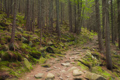 Beautiful green forest with a footpath. Beautiful green mysterious forest with a footpath Stock Images