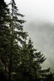 Beautiful Green Forest, Mist, Stock Photos