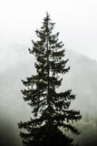 Beautiful Green Forest, Mist, Royalty Free Stock Images