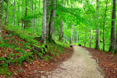Beautiful green forest. In national park Plitvica, Croatia Royalty Free Stock Photography
