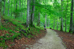 Beautiful green forest. In national park Plitvica, Croatia Stock Photos