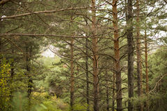Beautiful green forest Royalty Free Stock Photography
