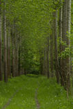 Beautiful green forest. Panorama of a path through a lush green summer forest Royalty Free Stock Images