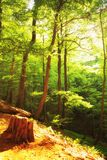 Beautiful green forest  Poland Bieszczady Royalty Free Stock Image