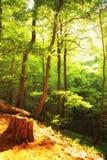 Beautiful green forest  Poland Bieszczady. Beautiful green forest  in sunny day Poland Bieszczady Royalty Free Stock Image