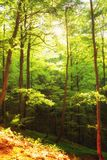 Beautiful green forest  Poland Bieszczady Stock Photo
