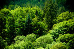Beautiful Green Forest Scene Royalty Free Stock Images