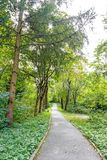 Beautiful Green Forest In Summer. Countryside Road, Path, Way, Lane, Pathway On Sunny Day In Spring Forest Stock Photo