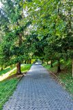 Beautiful Green Forest In Summer. Countryside Road, Path, Way, Lane, Pathway On Sunny Day In Spring Forest. Sunbeams Pour Through Stock Image