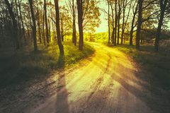 Beautiful Green Forest In Summer. Countryside Road royalty free stock image
