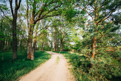 Beautiful Green Forest In Summer. Countryside Road Stock Photography