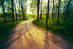 Beautiful Green Forest In Summer. Countryside Road Royalty Free Stock Photography