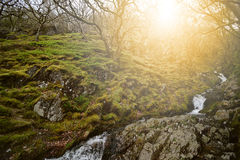 Beautiful green forest in summer Wales. Beautiful green forest in sunset summer Wales Stock Image