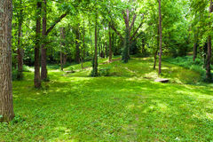 Beautiful green forest at sunny summer day. Royalty Free Stock Images