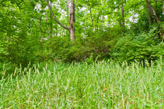 Beautiful green forest at sunny summer day. Royalty Free Stock Photos
