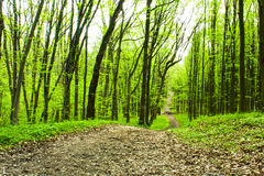 Beautiful green forest. There is a beautiful green path in-field Royalty Free Stock Images