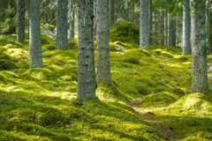 Beautiful green forest with thick moss on the floor Royalty Free Stock Photos