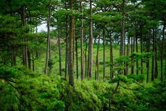 Beautiful green forest with traveller Royalty Free Stock Photos