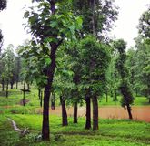 Beautiful  green forest trees. Green forest trees in monsoon Stock Images
