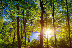 Beautiful green forest Stock Image