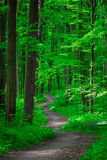 Beautiful green forest Royalty Free Stock Photo