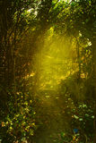 Beautiful green forest warm Royalty Free Stock Image