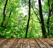 Beautiful green forest with wood planks floor Stock Images