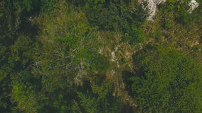 Beautiful green forests and sandy roads. In the daytime stock footage