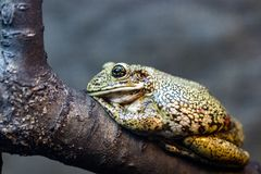 Beautiful green frog on a branch, macro photo stock photo