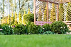 Beautiful green garden with frsesh boxwood bushes, flowers and wood grating summerhouse.Scenic summer gardening background. Landsc Royalty Free Stock Photo