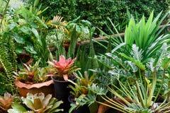 Beautiful green garden landscape in tropical rain season royalty free stock image
