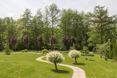Beautiful green garden with a path going between two Japanese willow trees. In front of red plum trees 0246 stock image