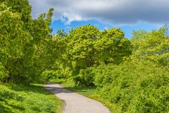 A Beautiful Green Glade. Beautiful Glade During Summertime with Green Bushes, Trees and a Cloudy Sky in Stockholm, Sweden Stock Photos