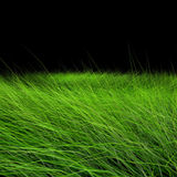 Beautiful green grass Royalty Free Stock Images