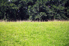 Beautiful green grass Stock Photos