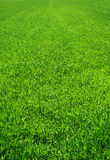 Beautiful green grass stock photography