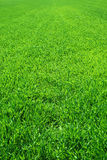 Beautiful green grass Royalty Free Stock Photography
