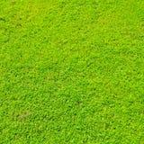 Beautiful green grass Royalty Free Stock Photos