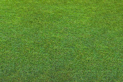 Beautiful green grass abstract, texture, background. Royalty Free Stock Images