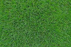 Beautiful Green grass background texture. Stock Images